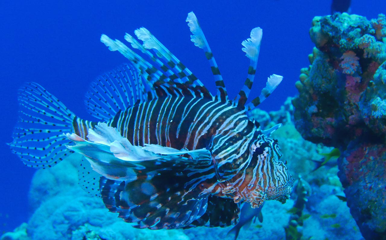 voyage plongée sous marine egypte